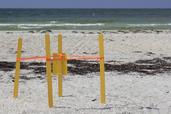 Sea turtle nesting season starts May 1